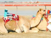 robot camel jockey in Dubai